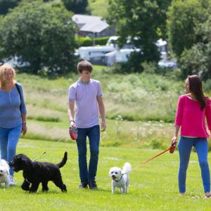 Whitehill Country Park Dog Walking Areas