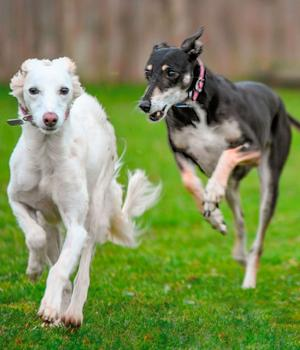 Whitehill's Helping Hounds